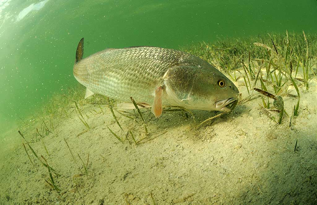 Backcountry Fishing for Redfish and Snook